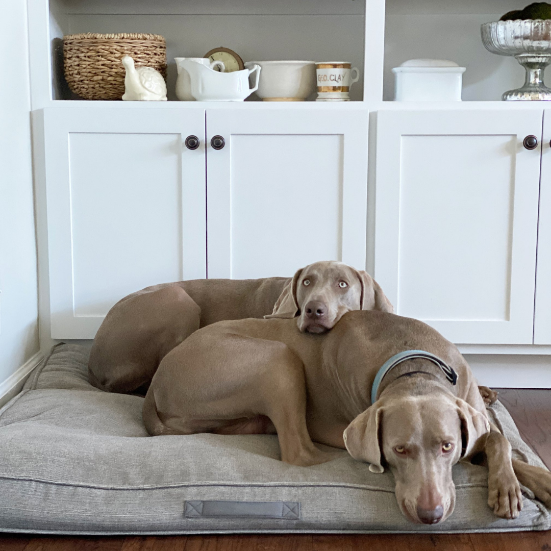 How to Keep Your Home Smelling Fresh With Pets – Clean Mama